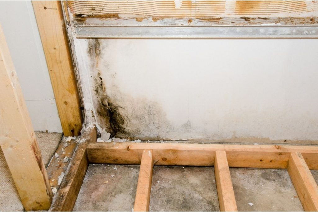 image of mold growth in basement
